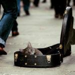 Kan dyr lide musik?