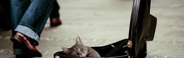 Katte-og-musik