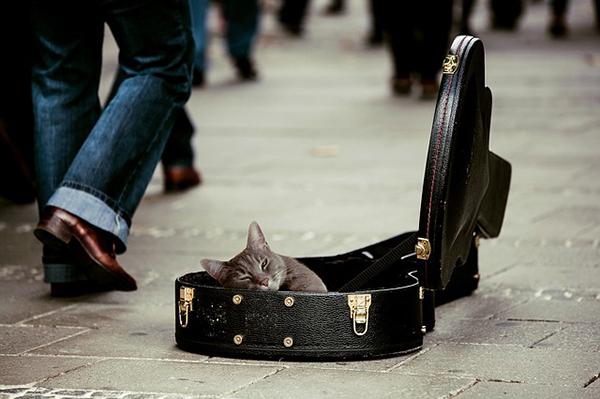 Katte og musik